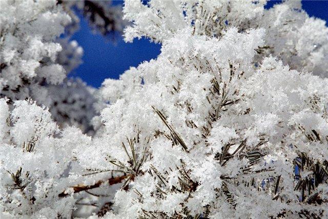 Интересные факты про снег