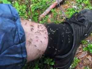 Комары и муÑи