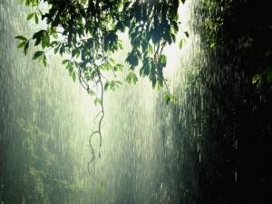 Факты о дожде