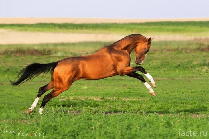 Молодой конь