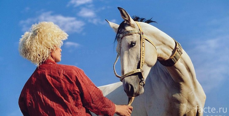 Туркмен и лошадь