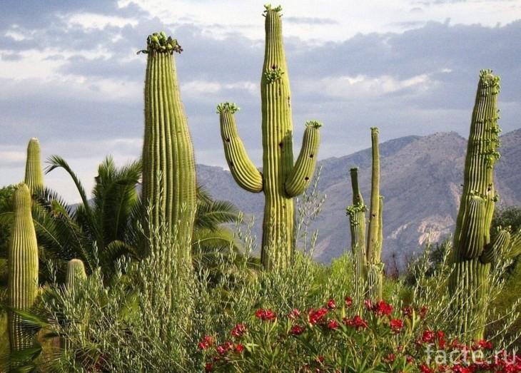 Высокие растения