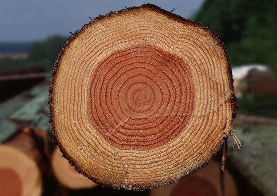 Площадь срезов всех ветвей дерева на каждой высоте остается одинаковой и равна площади среза основно