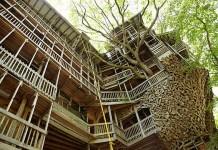 Самый большой дом, построенный на дереве