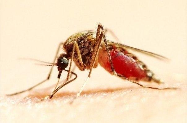 Араматы против комаров