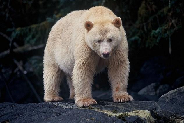 10 фактов о медведях