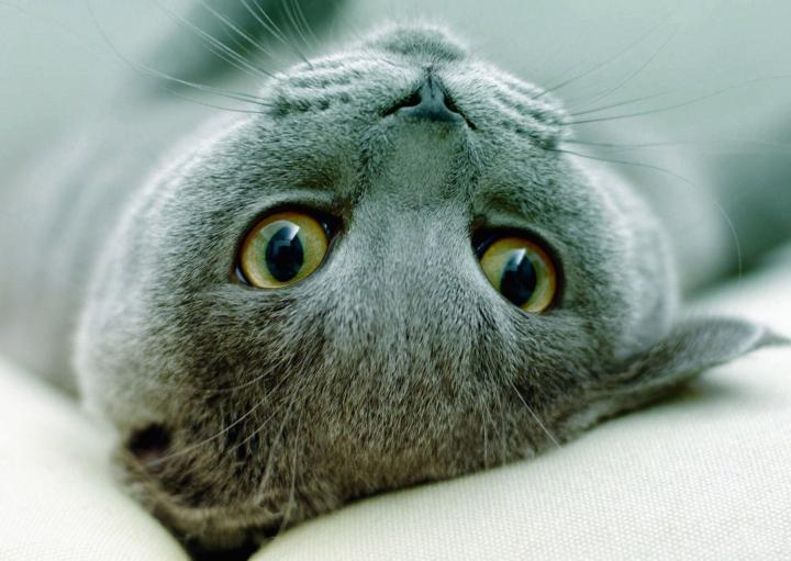 Кошки умеют перенимать привычки хозяев