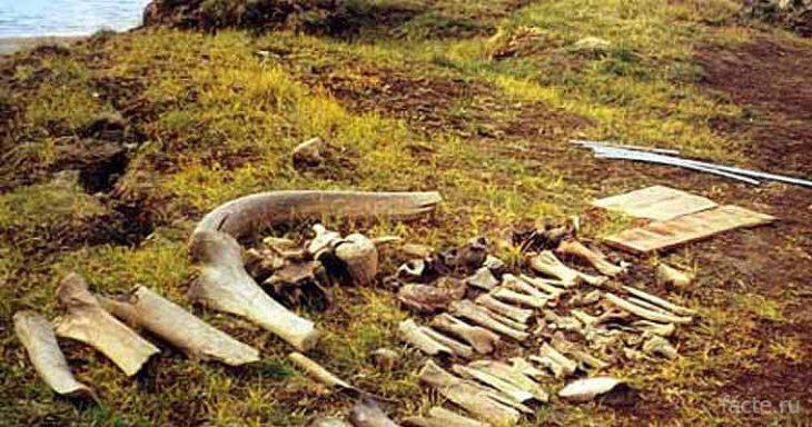 Почему мамонты вымерли