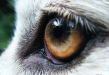 Животное с большими глазами