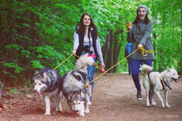 собаки на прогулки