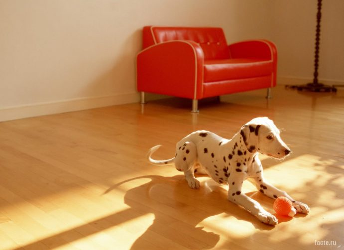 собака в комнате