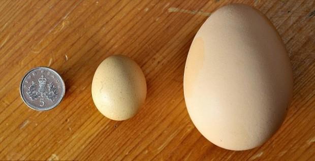 Почему яйцо имеет такую форму?