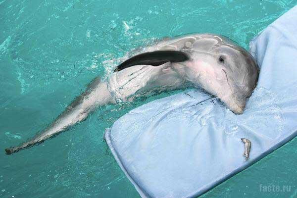 спит дельфин