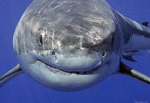 факты об акулах