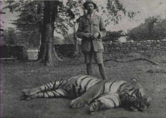Самый известный тигр — Чампаватская тигрица