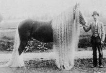 Дикие лошади - конь Линус