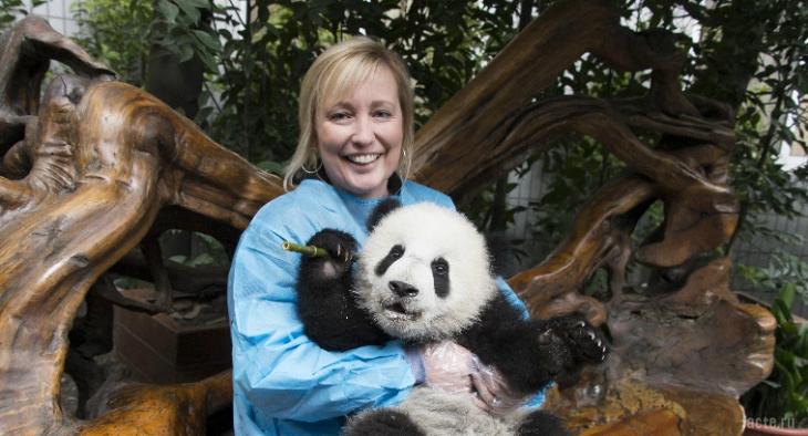 исследование панд