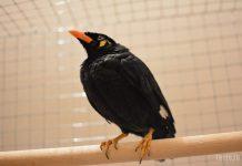 Птица говорун