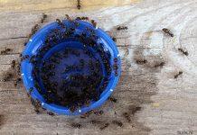 эксперименты с муравьями