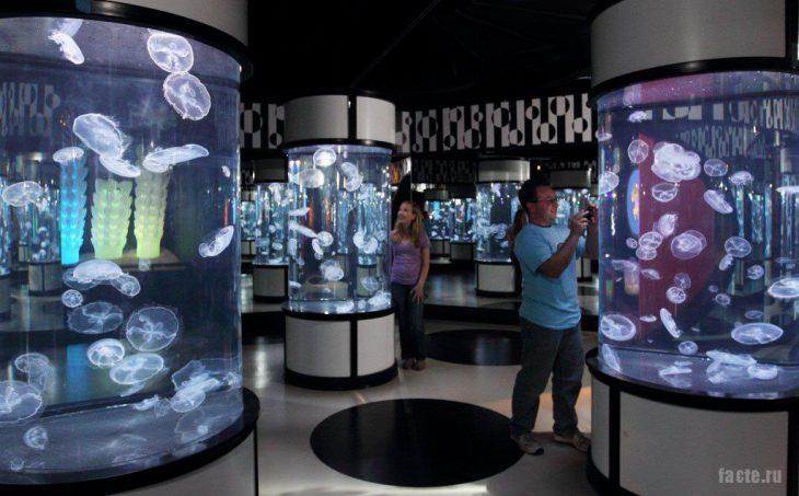 медузы в аквариумах