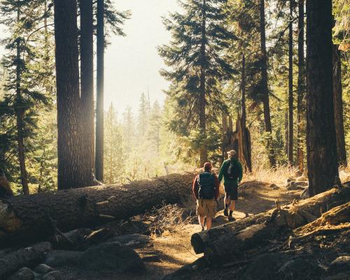 тропа из леса