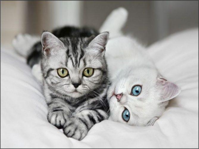 что нельзя кошкам