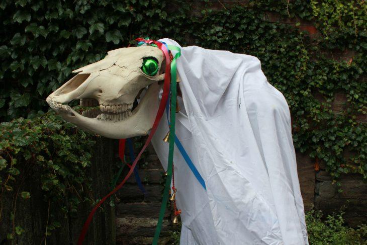 Уэльс череп лошади
