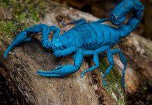 Познавательные факты о скорпионах