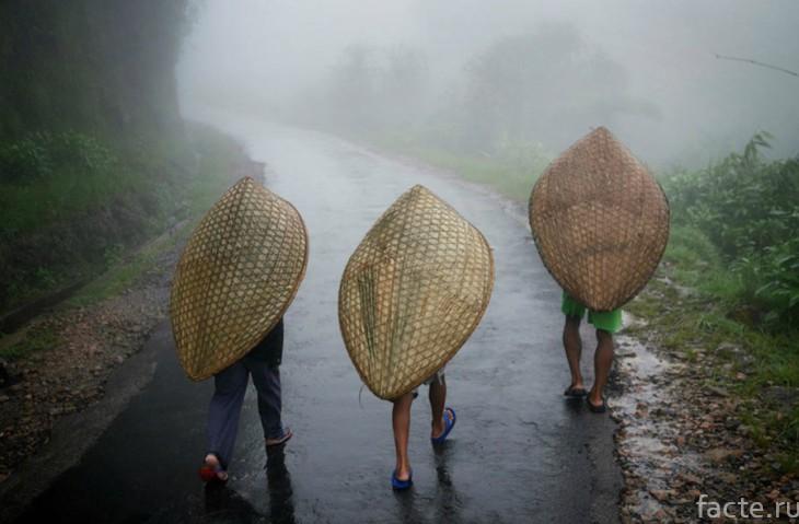 Дождь в Мегхалае
