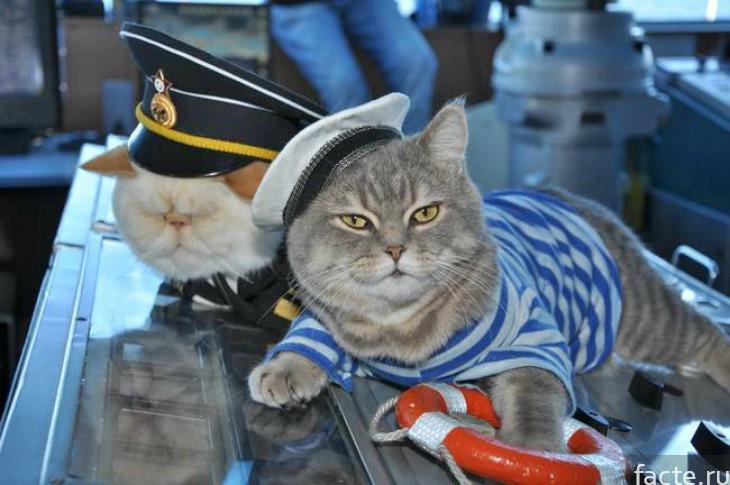Коты-моряки
