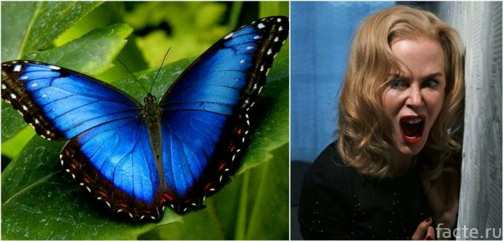 Кидман и бабочка