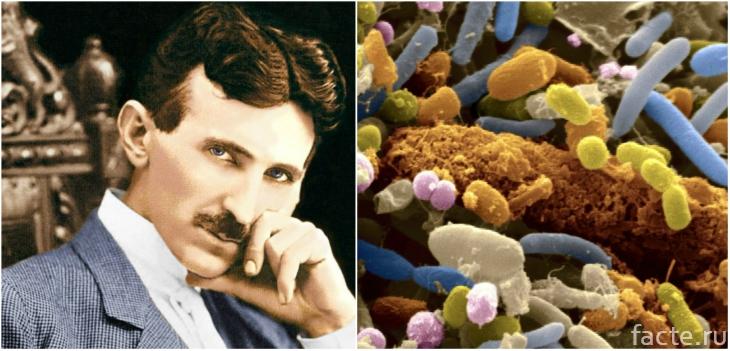 Тесла и бактерии