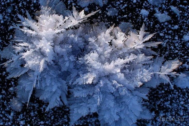 Ледяные цветы арктического океана