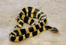 Самые ядовитые змеи на планете