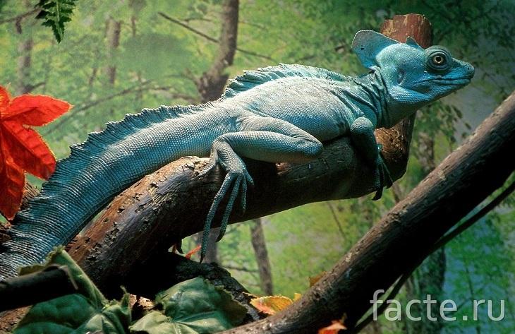 Живые драконы, которых можно держать дома