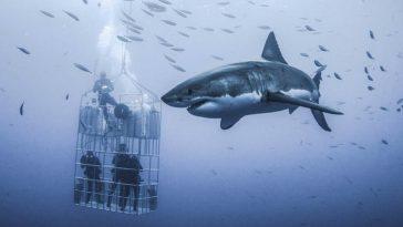 Популярное развлечение – в клетке к акулам – чуть не стоило жизни дайверам!