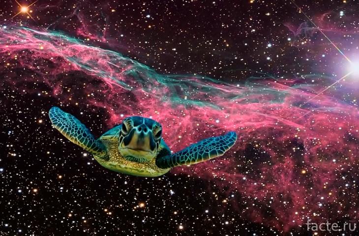 Как черепахи облетели вокруг Луны