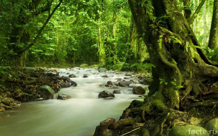 Малайзия природа