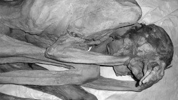 На египетских мумиях нашли татуировки