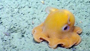 Милый осьминог Дамбо
