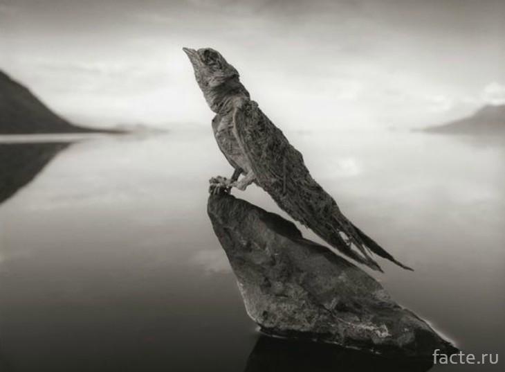 Окаменелая птица