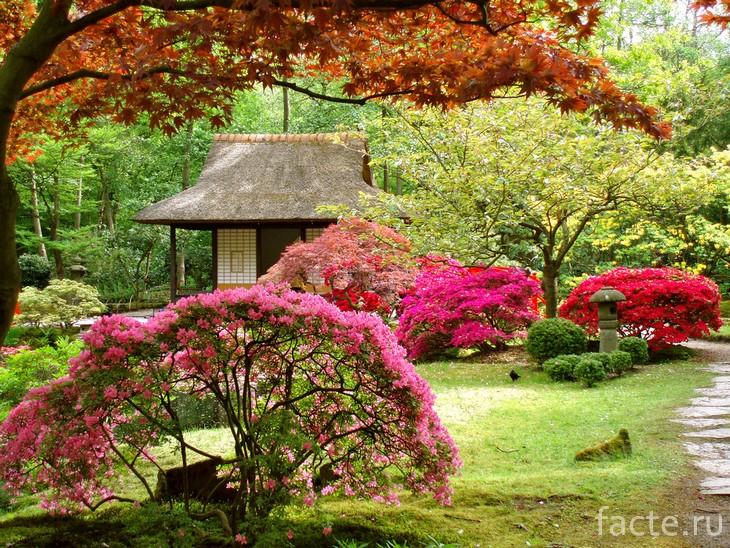 Японский сад 12