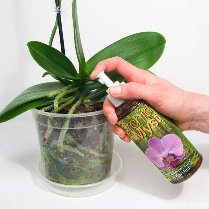Как подкармливать орхидеи