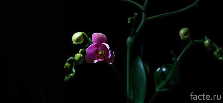 Орхидея ночью