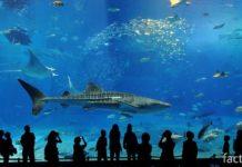 Самый большой аквариум Сингапура