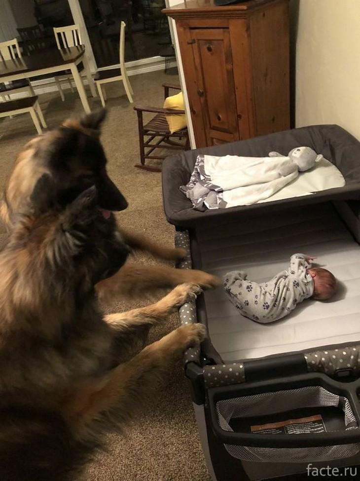 2 собаки и малыш