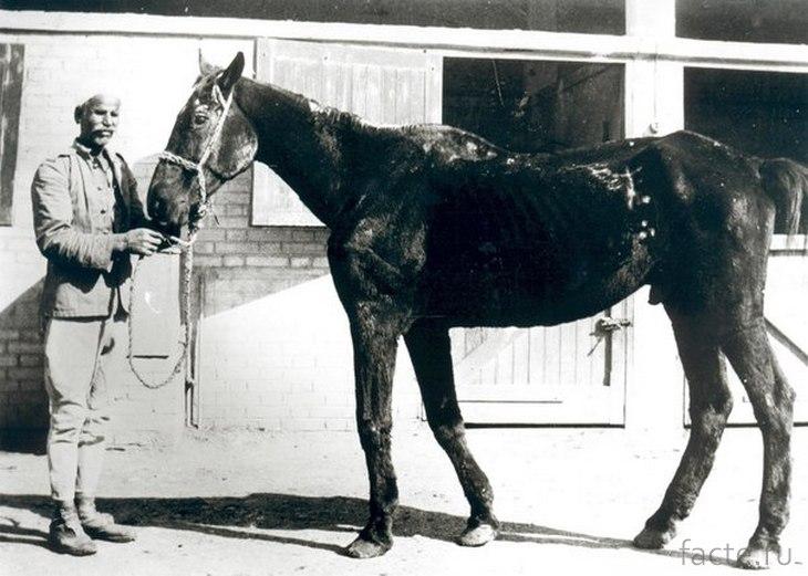 Конь Старина Билл