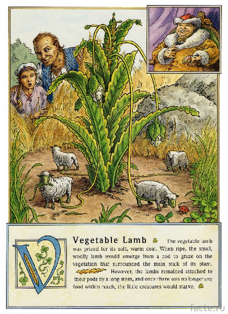 Овощные ягнята - книжная иллюстрация