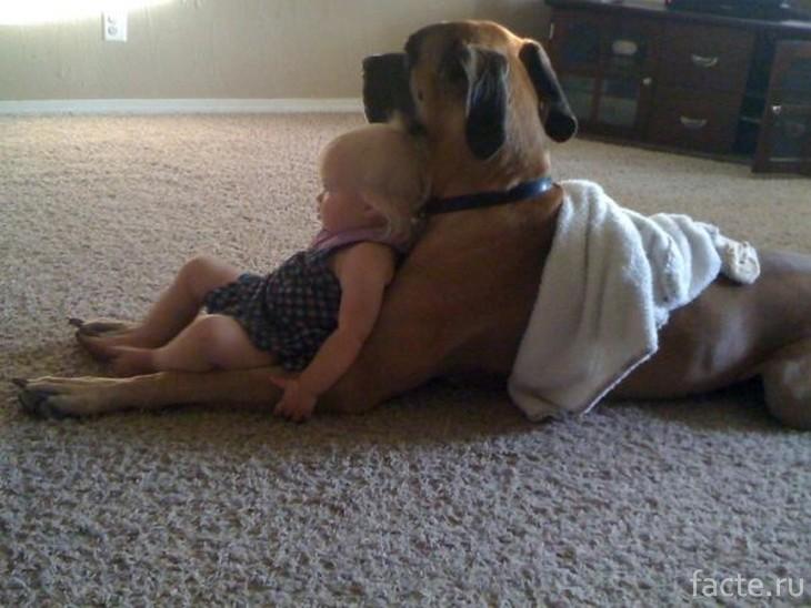 Малышка и пес