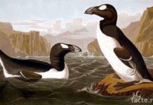 Настоящие пингвины
